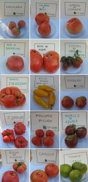 tomates bierge_blog