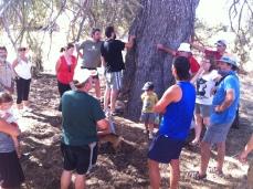 Visita etnobotánica - pino de más de 200 años!