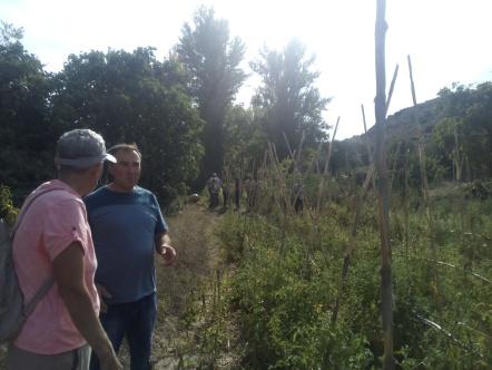 Visita de campo_tomate Mas de Ruiz_20170921