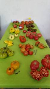 cata tomates Jalo